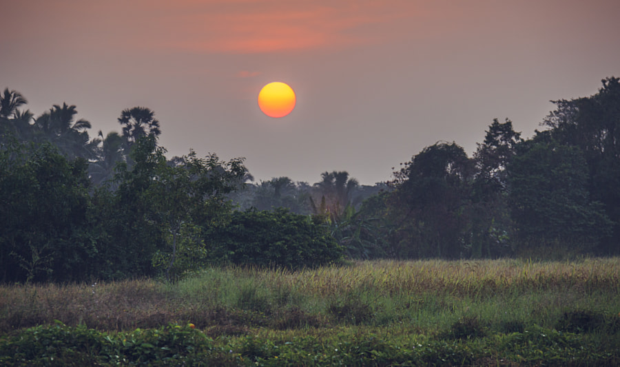 Maa Wee Rice at Sunrise, Sri Lanka #2 by Son of the Morning Light on 500px.com