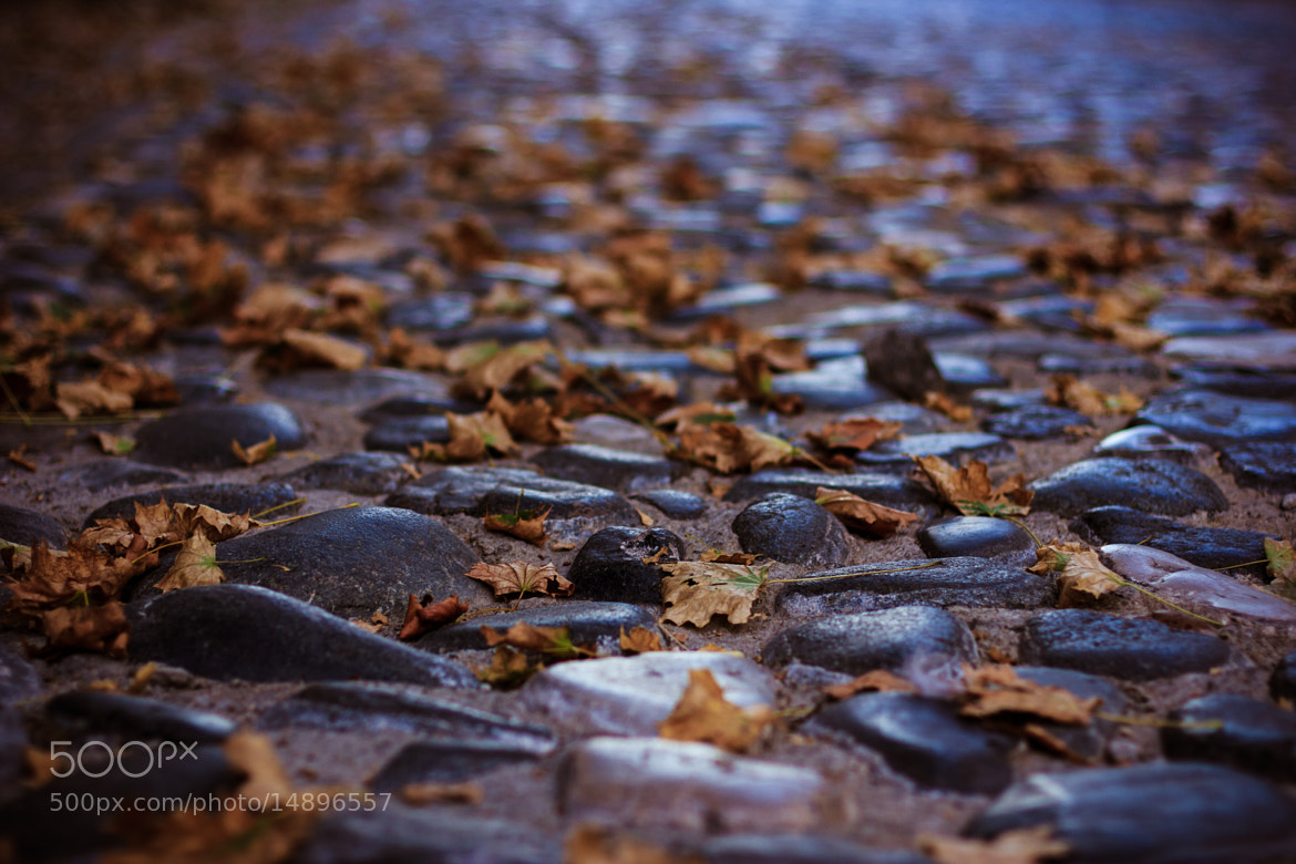 Photograph Cobble-stone street by Slavica Stajic on 500px