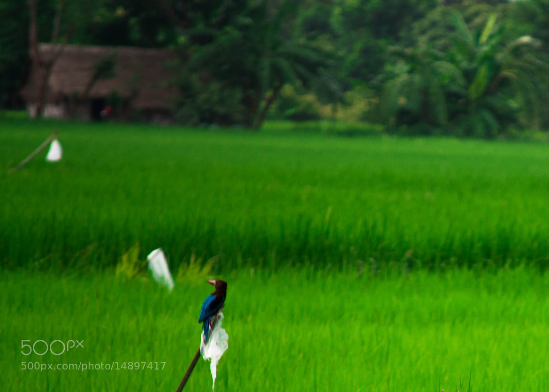 Photograph Little Bird by Htut Myat on 500px