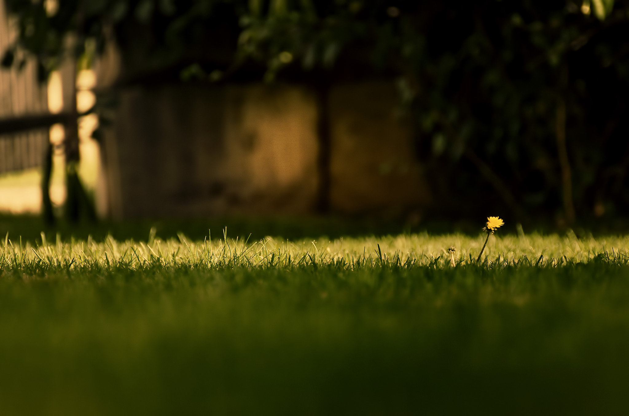 Photograph The Last Dandelion by David Bugyi on 500px
