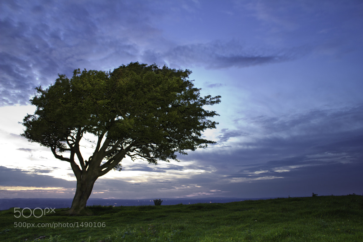 Photograph The Tree by Francois Steque on 500px