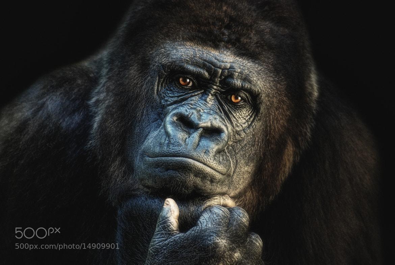 Photograph thinking about U! II by Joachim G.  Pinkawa on 500px