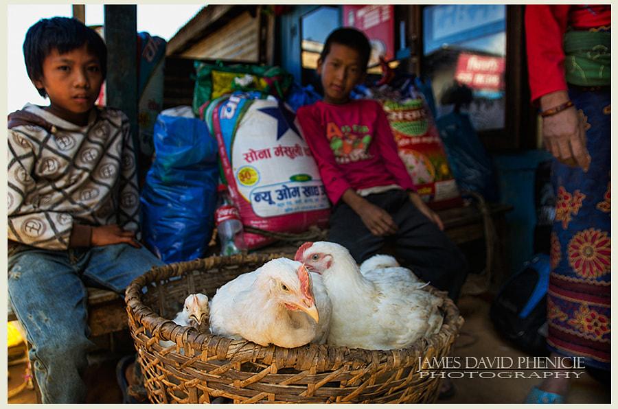 Nepal Series: Chicks
