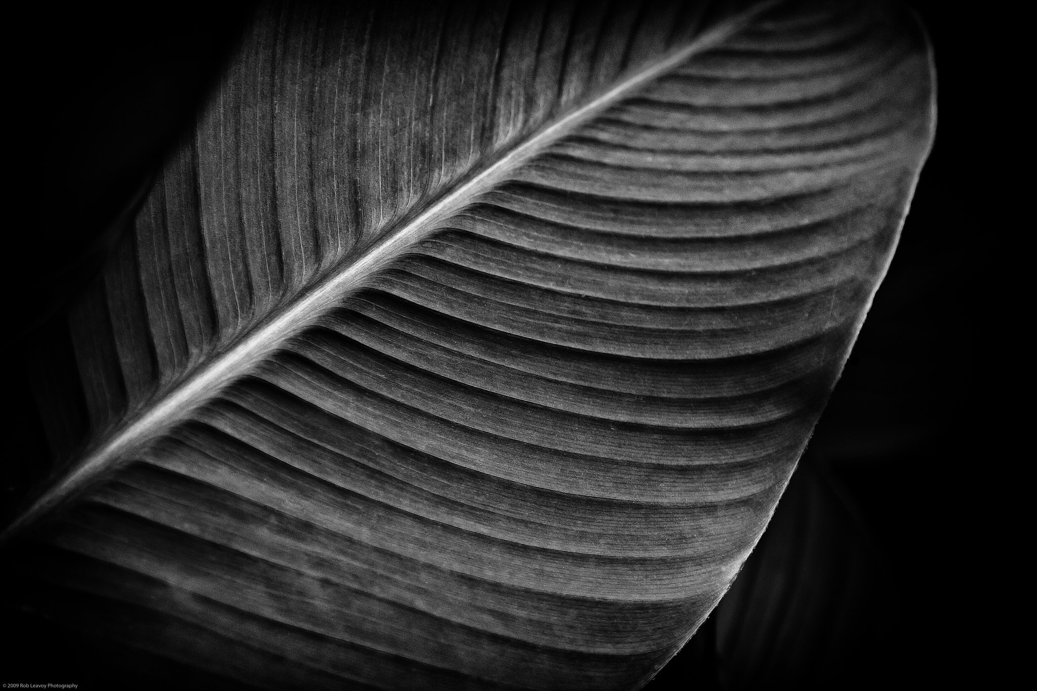 Photograph Leaf by Rob Leavoy on 500px