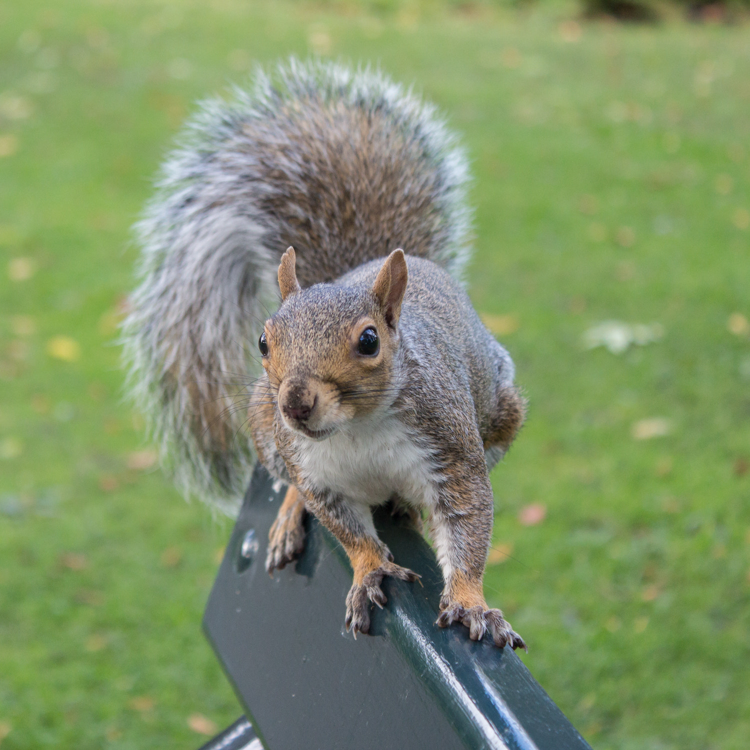 Photograph Squirrel by Steve Hall on 500px