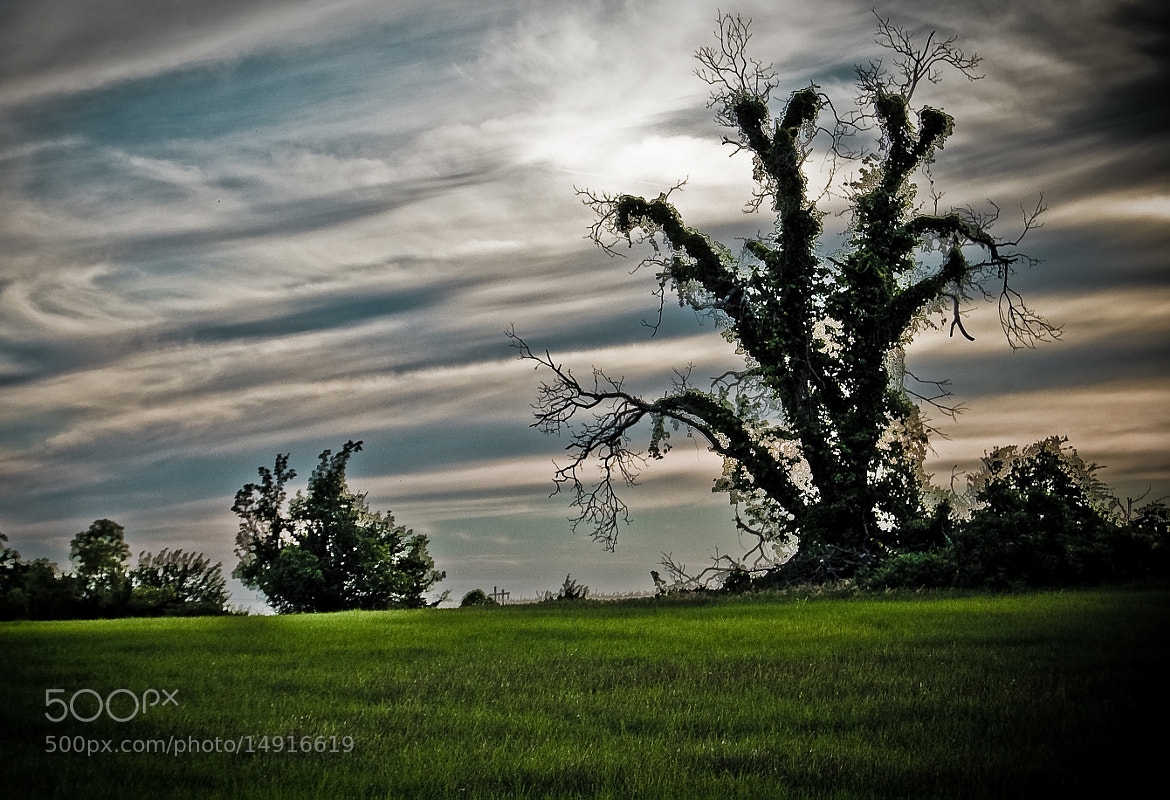 Photograph Wisping Sky & The Creepy Tree by Joe Andrews on 500px