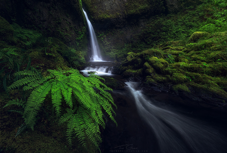 Solace by Ted Gore on 500px.com