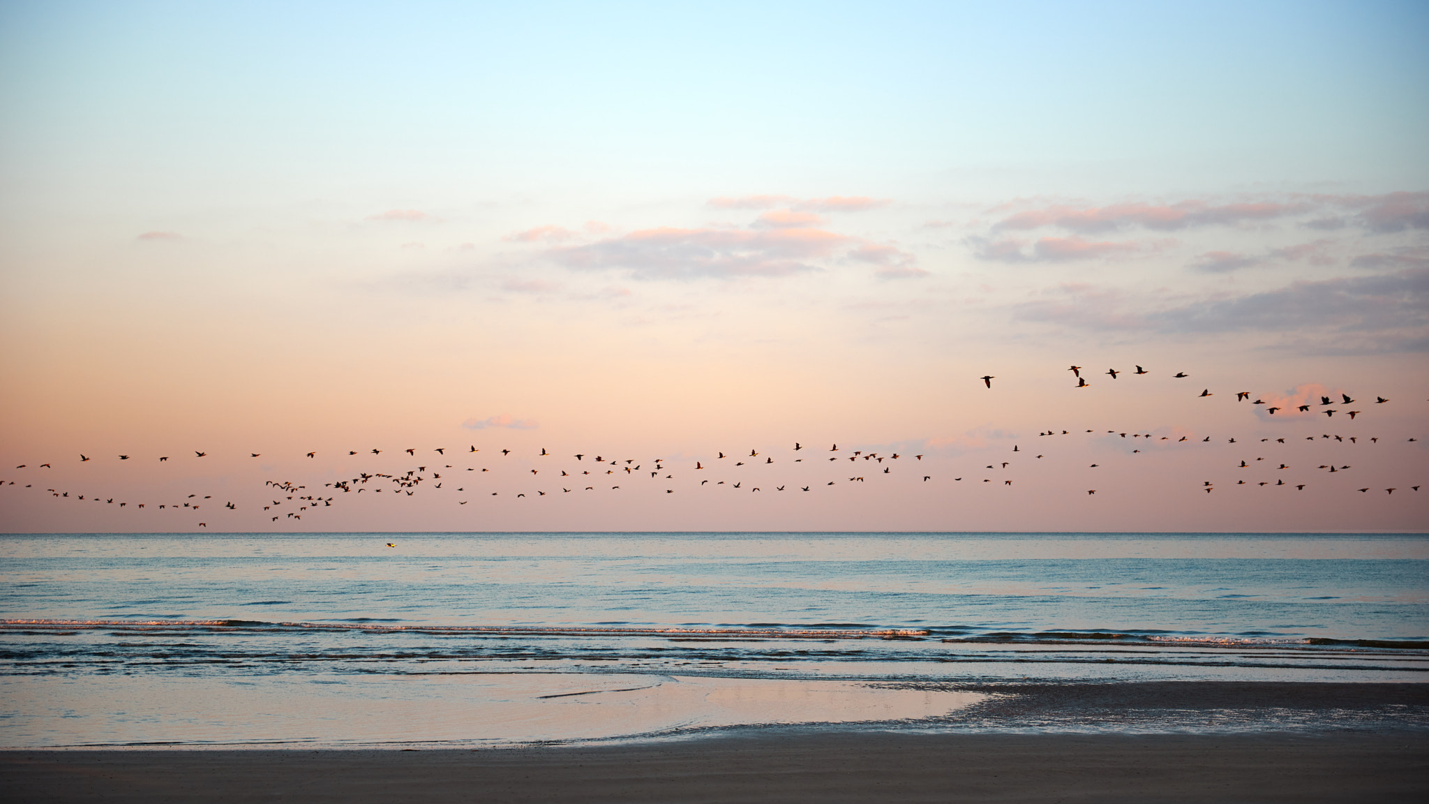 Flock of birds flying along shoreline at dawn