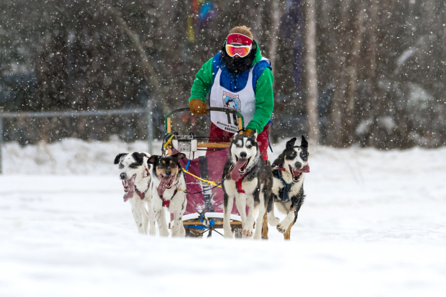 Open North American sled dog races by Lindsay Kaye on 500px.com