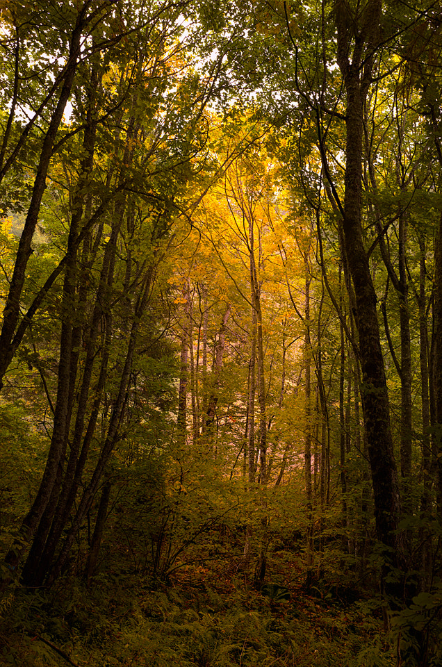 Photograph lights in the woods by Stefano Springhetti on 500px