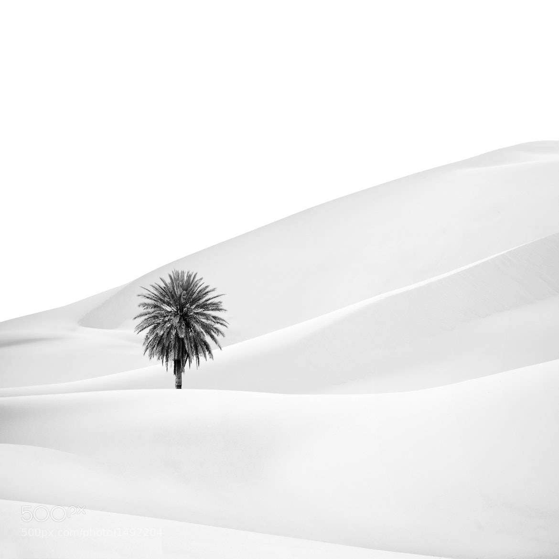 Photograph Sahara Desert by John Quintero on 500px