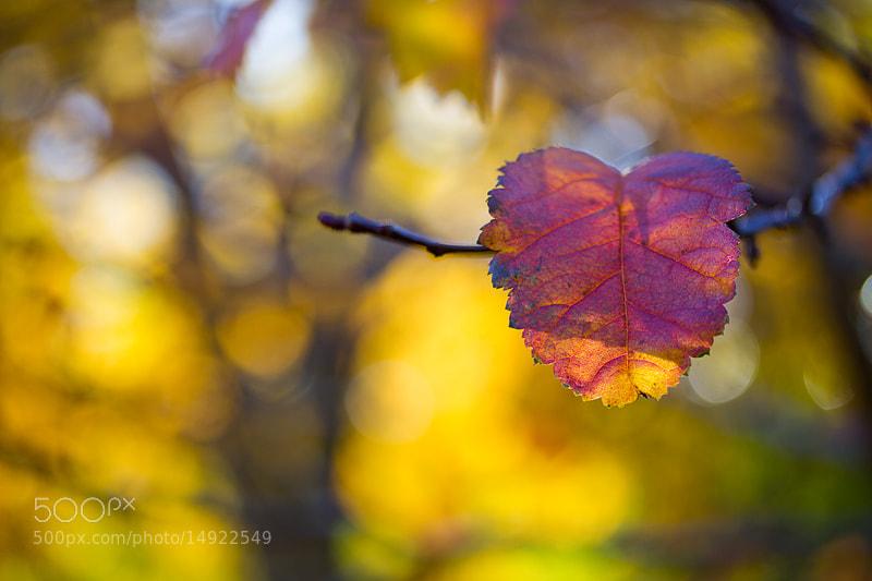 Photograph Autumn colors by Margrét Elfa Jónsdóttir on 500px