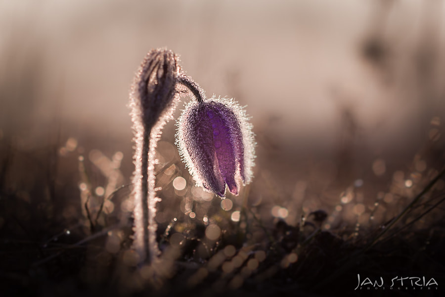 In the Morning Light by Jan Stria on 500px.com