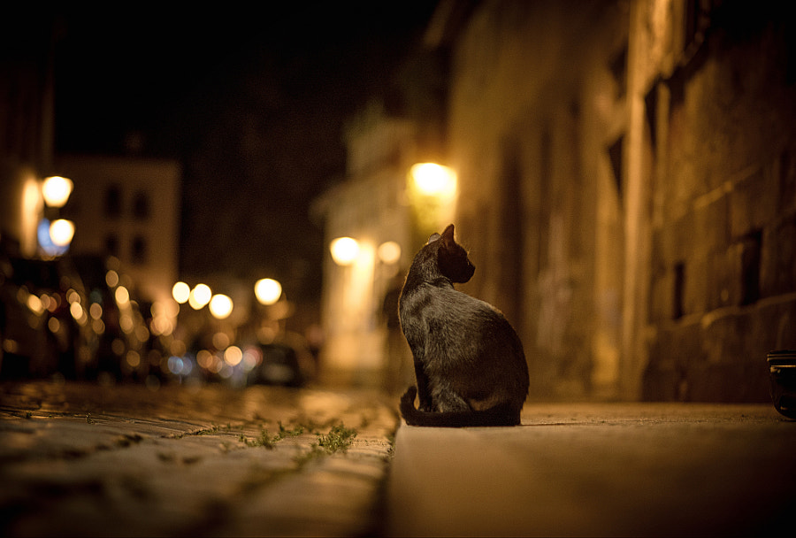 cat city night street bokeh ligh by Waqas Shaikh on 500px.com