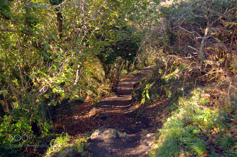 Photograph path by jacek tomczak on 500px