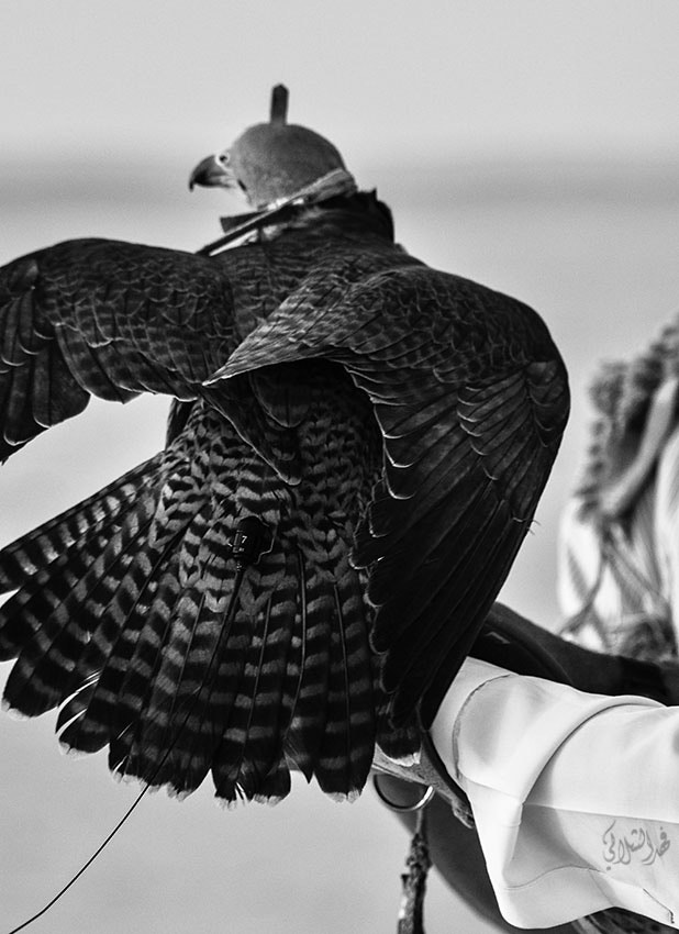 Photograph Time to hunt by Fahad Alshelaly on 500px