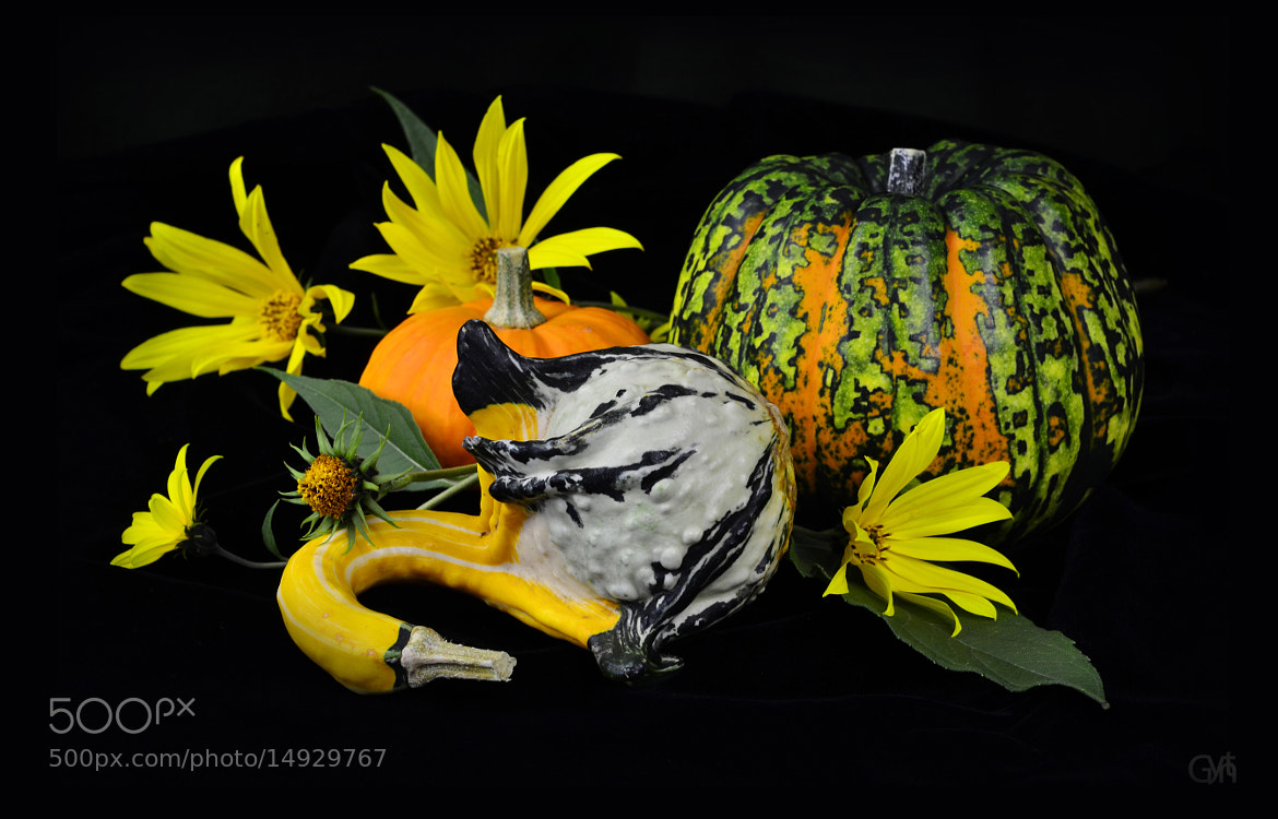 Photograph Pumpkins and flowers in black by Gynt S on 500px