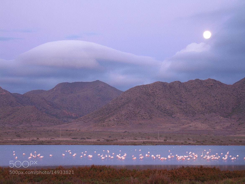 Photograph Luna, nubes y flamencos by Miguel Castillo Lazo on 500px