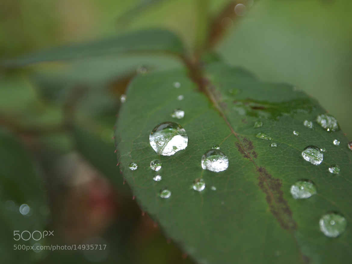 Photograph Diamond drops by Céline Manin on 500px
