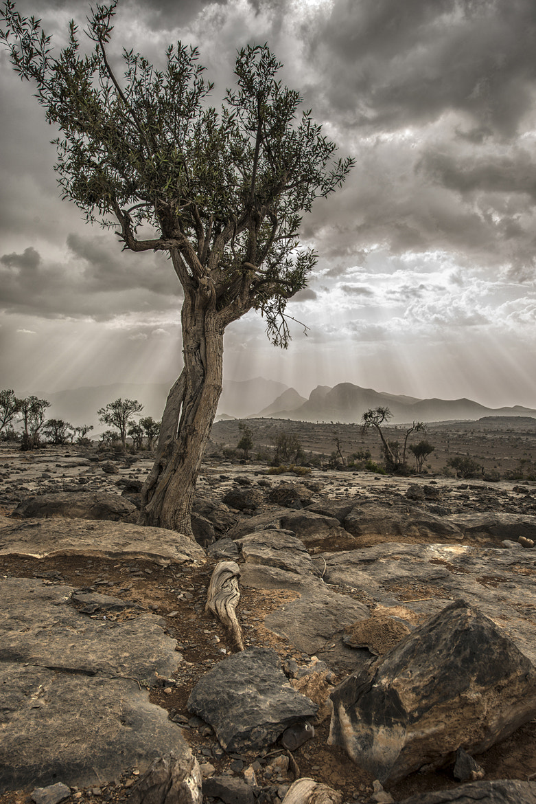 Photograph Untitled by Abdo Hinai on 500px
