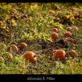 Pumpkin Patch by Donald Miller (DBMiller)) on 500px.com