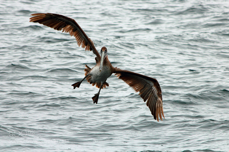 Photograph Pelican Landing by Jeff Tiemann on 500px