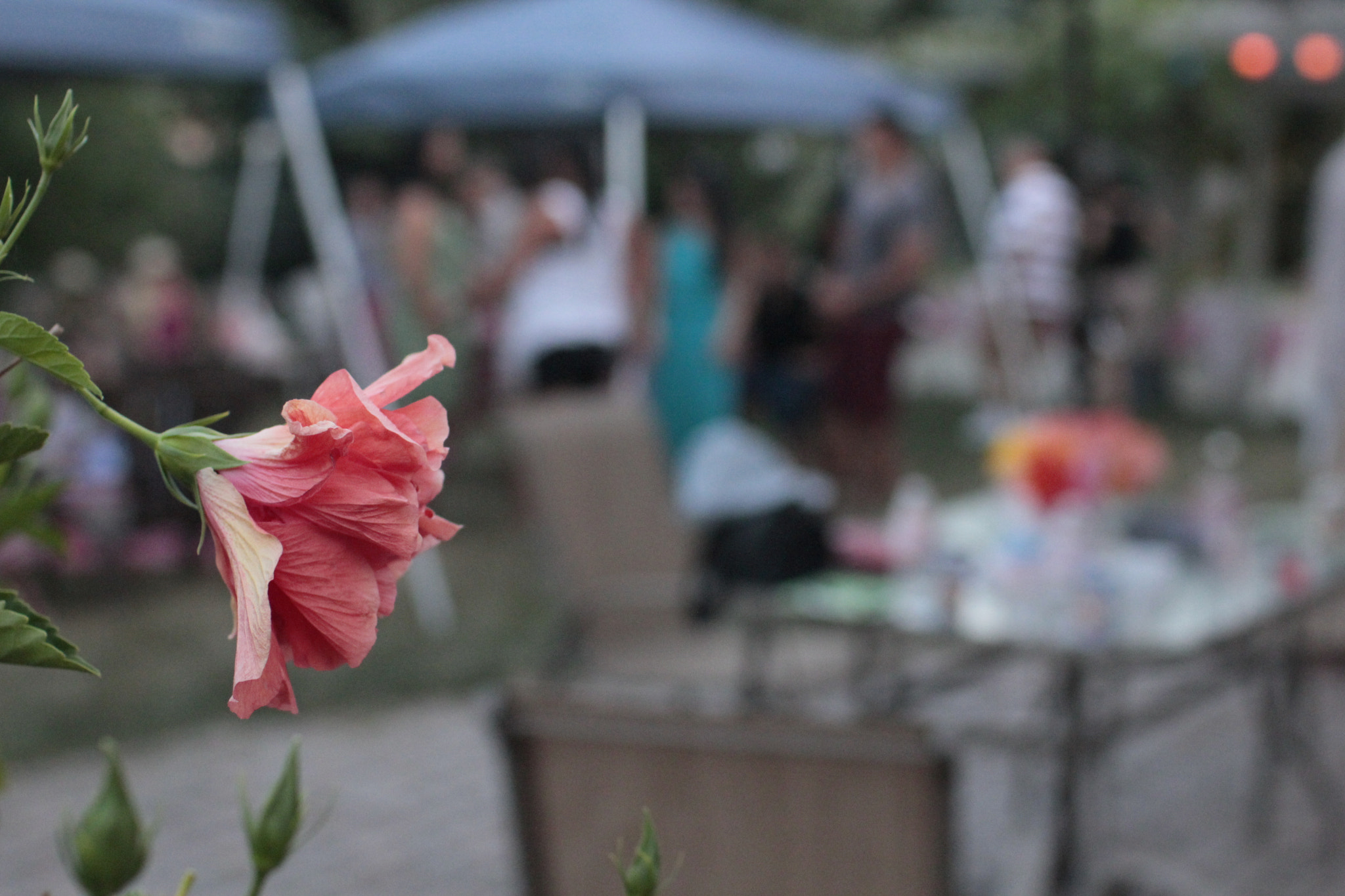 Photograph Friends, Food, and a Flower by Francis J Alcordo on 500px
