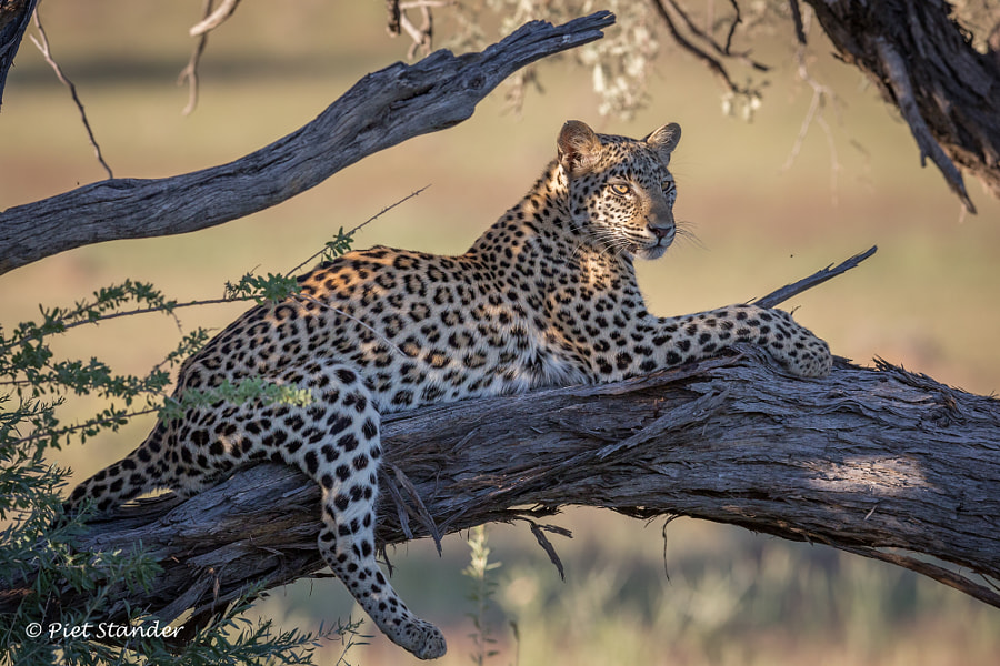 Masego by Piet Stander on 500px.com