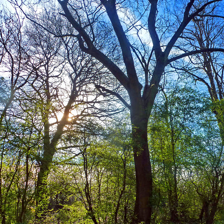 Hampstead Heath Trees in, Panasonic DMC-TZ19