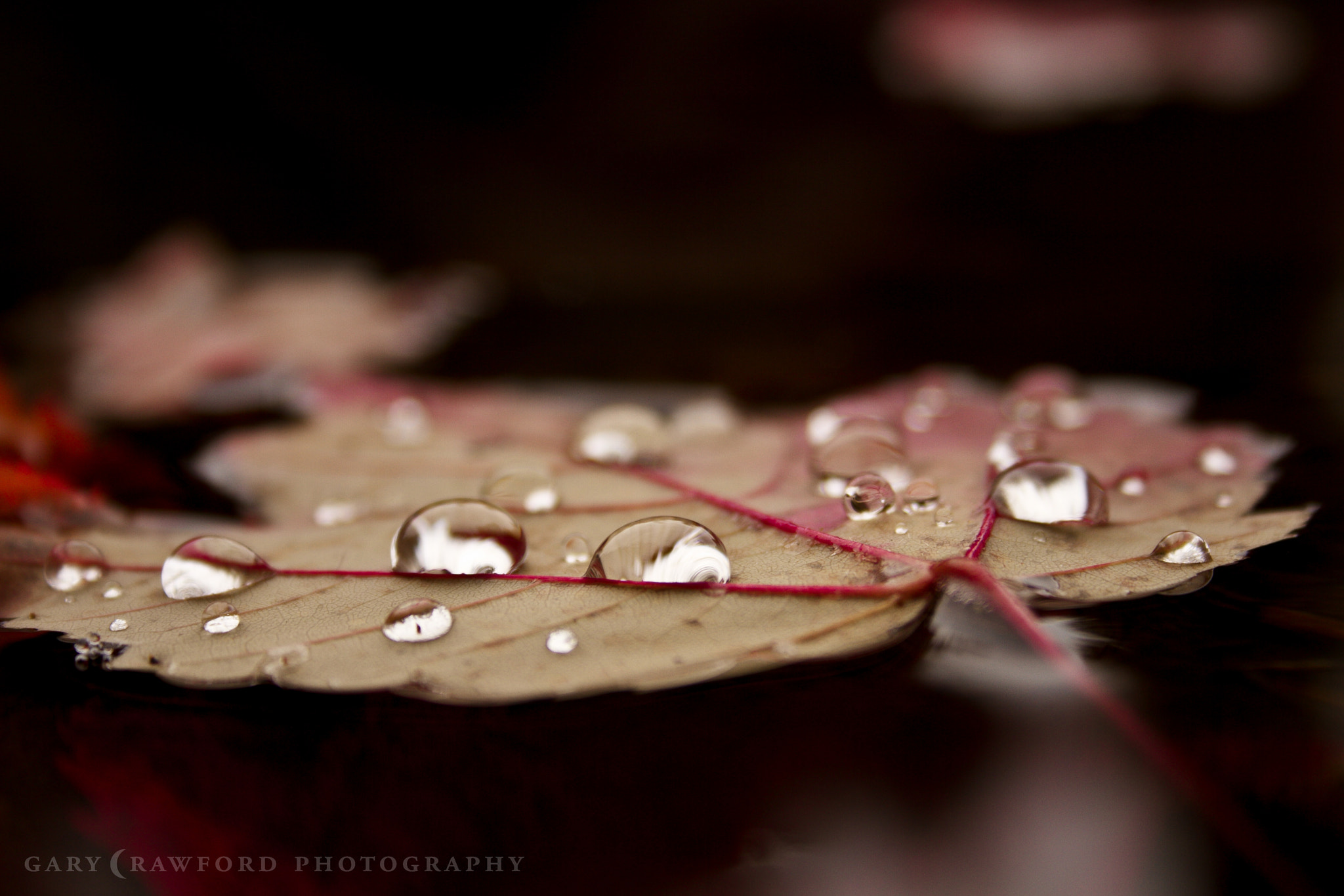 Photograph Fall and Raindrops by Gary Crawford on 500px