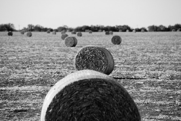 Photograph Round Bales by RobBrummett on 500px
