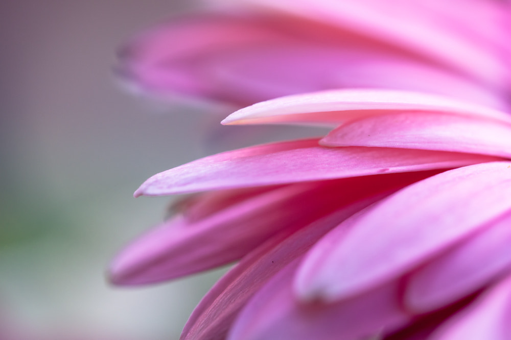 Photograph beautiful pink detail by Marion Fanieng on 500px
