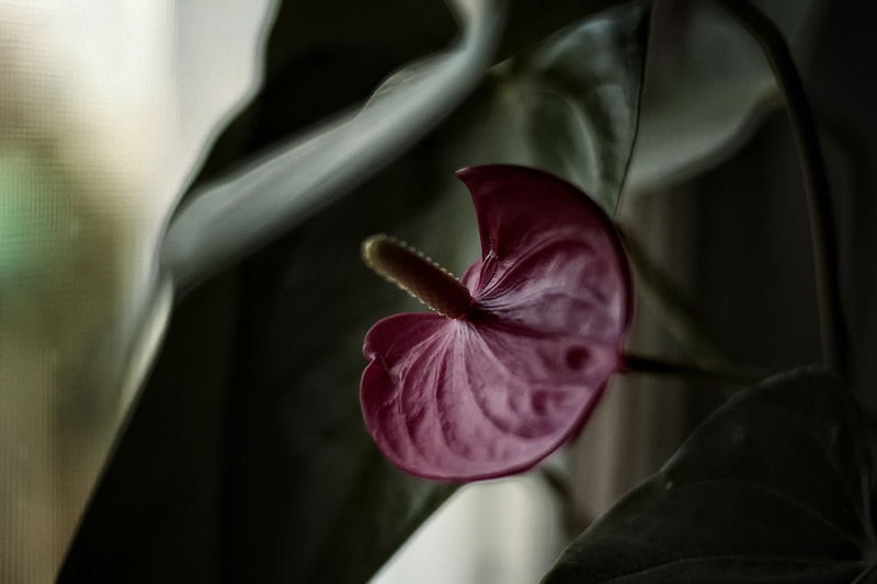 Photograph Untitled by Maria Koss on 500px