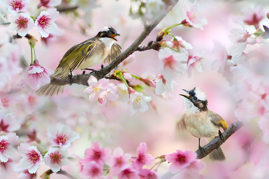~ Lovers Time ~, автор — FuYi Chen на 500px.com