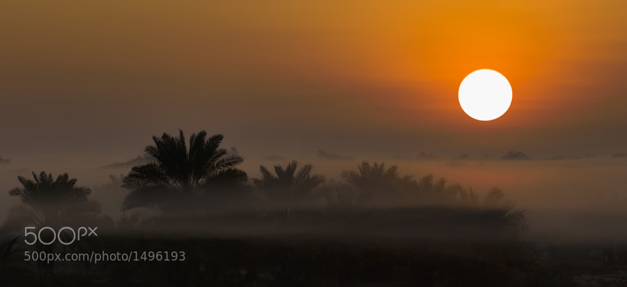 This photo was taken in Bahrain during sunrise.