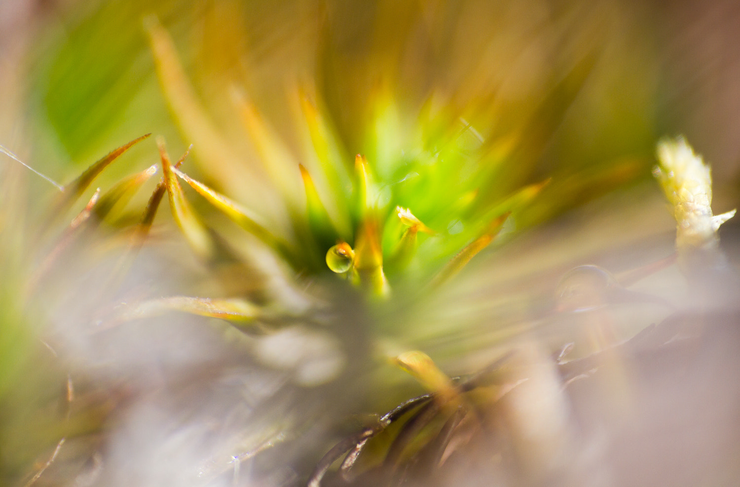 Photograph Moss by Irina Hess on 500px
