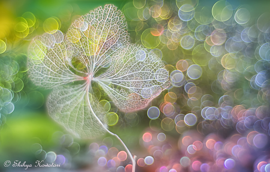 Symphonies for Magic Moment by Shihya Kowatari on 500px.com