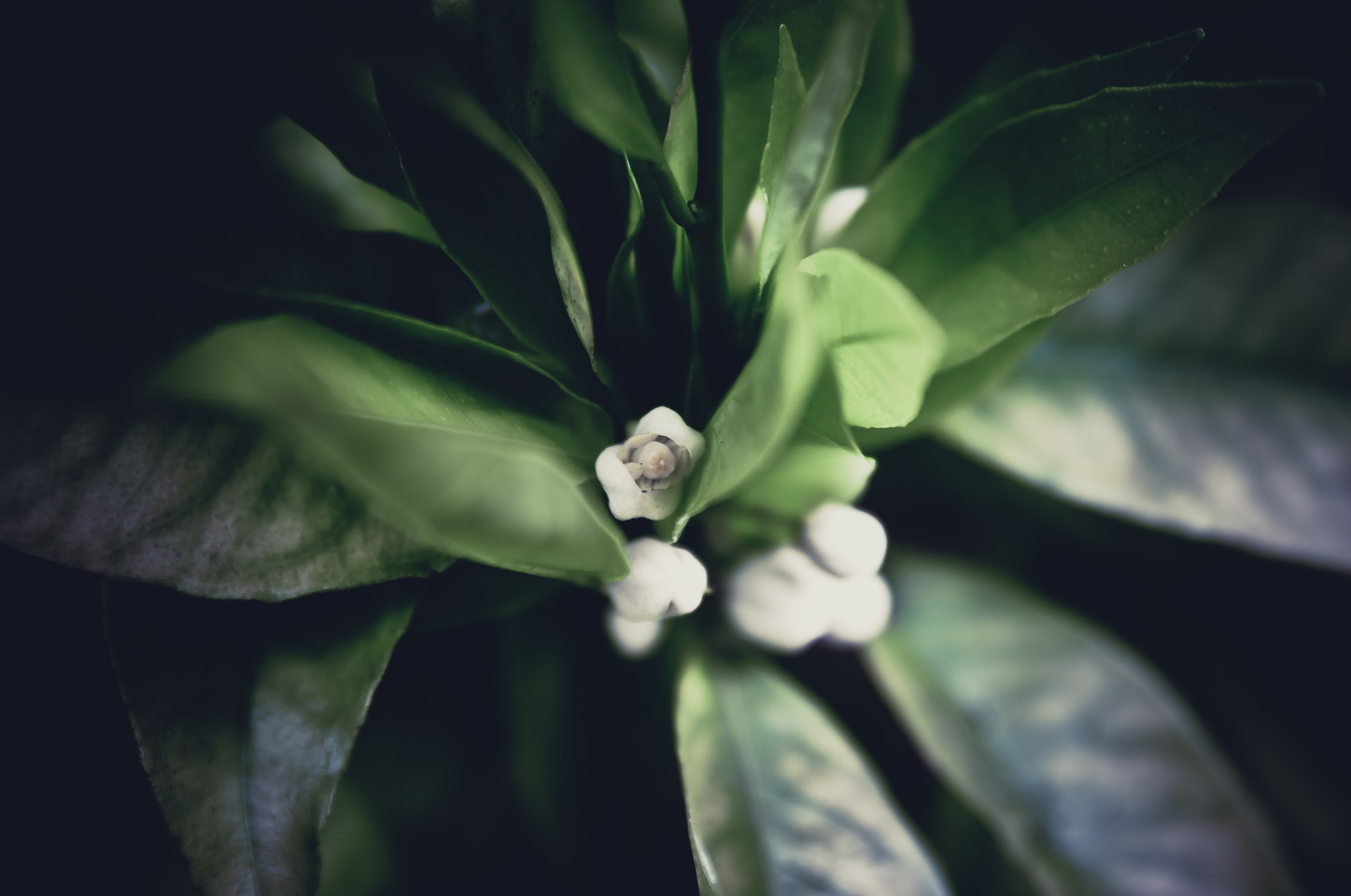 Photograph White by Kate Sheffield on 500px