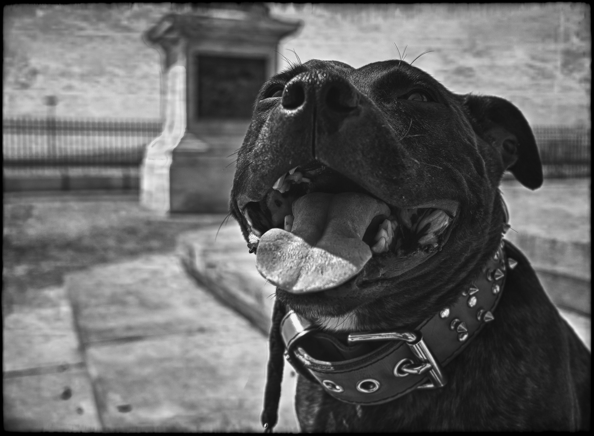 Photograph happy dog by Chloé Ophelia on 500px