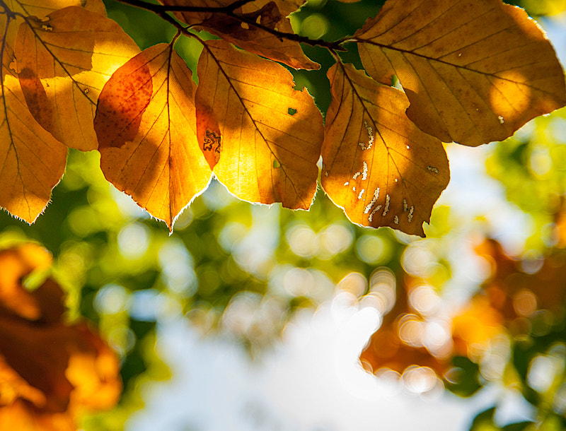 Photograph autumn is coming by Matthias Wild on 500px