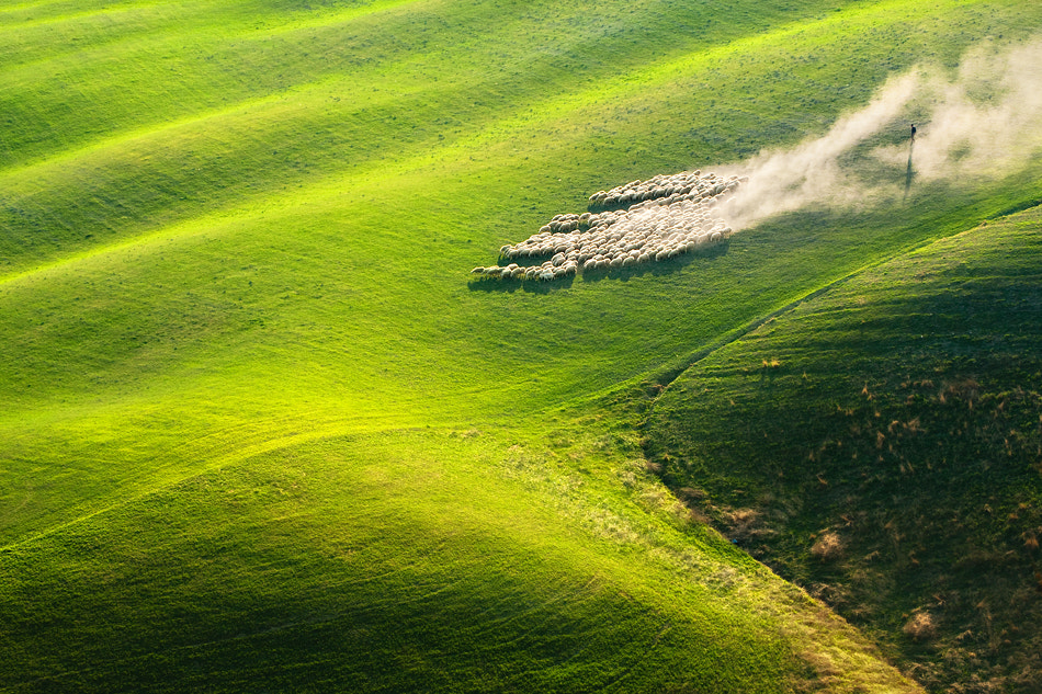 Photograph Pasturage by Marcin Sobas on 500px