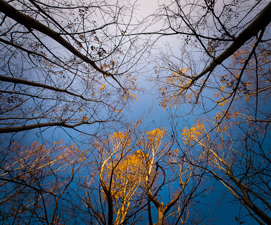 Photograph Look to the sky by Brane Kosak on 500px