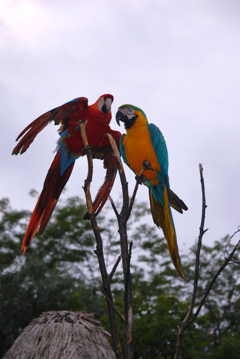 Photograph Are they parrots by Miluska Pareja on 500px
