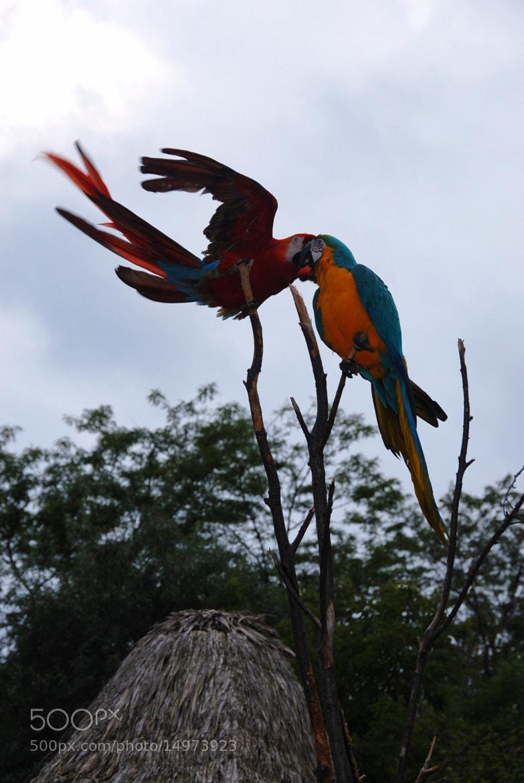 Photograph parrots  by Miluska Pareja on 500px