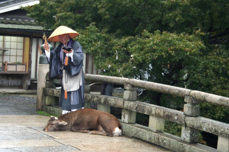Photograph Tōdai-ji Monk & Deer by Vasilis Argyropoulos on 500px