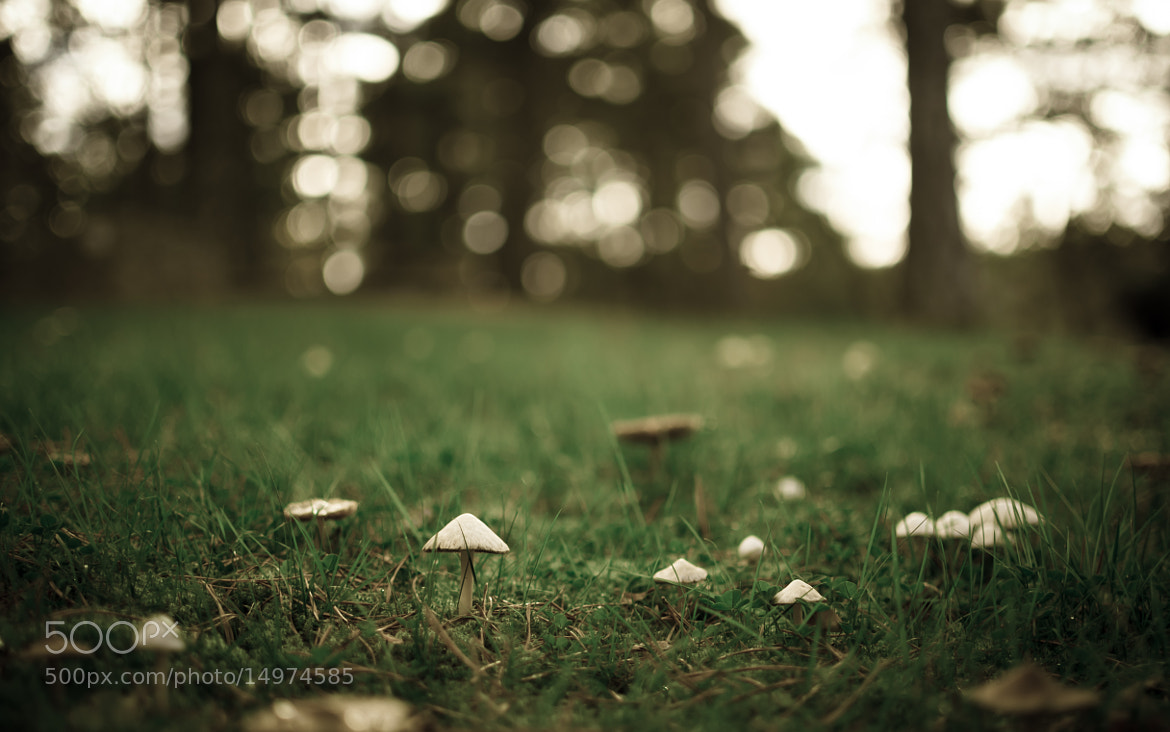 Photograph Mushroom yard by Riku Toivonen on 500px