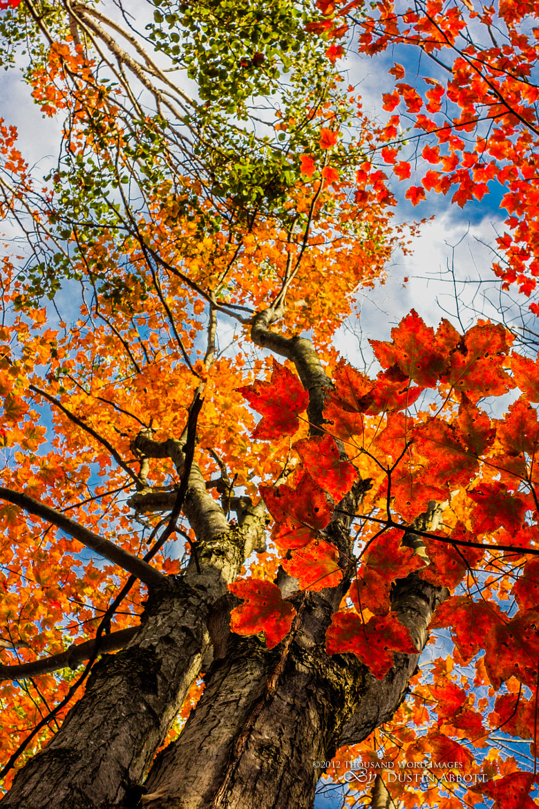 Photograph Just Look Up by Dustin Abbott on 500px