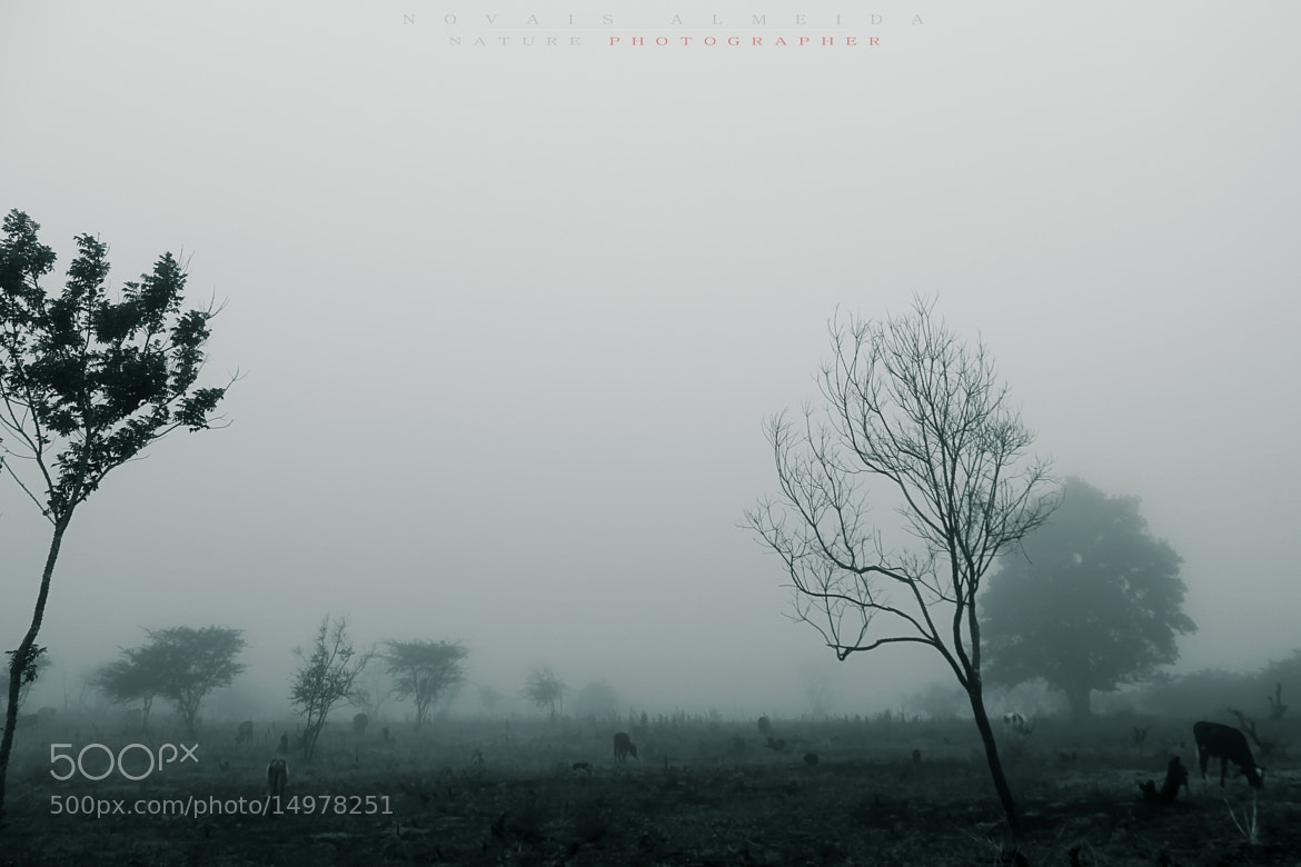 Photograph Neblina pesada by Novais Almeida on 500px