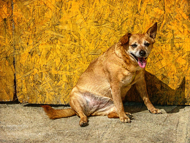Photograph Hot Dog by Link Bekka on 500px