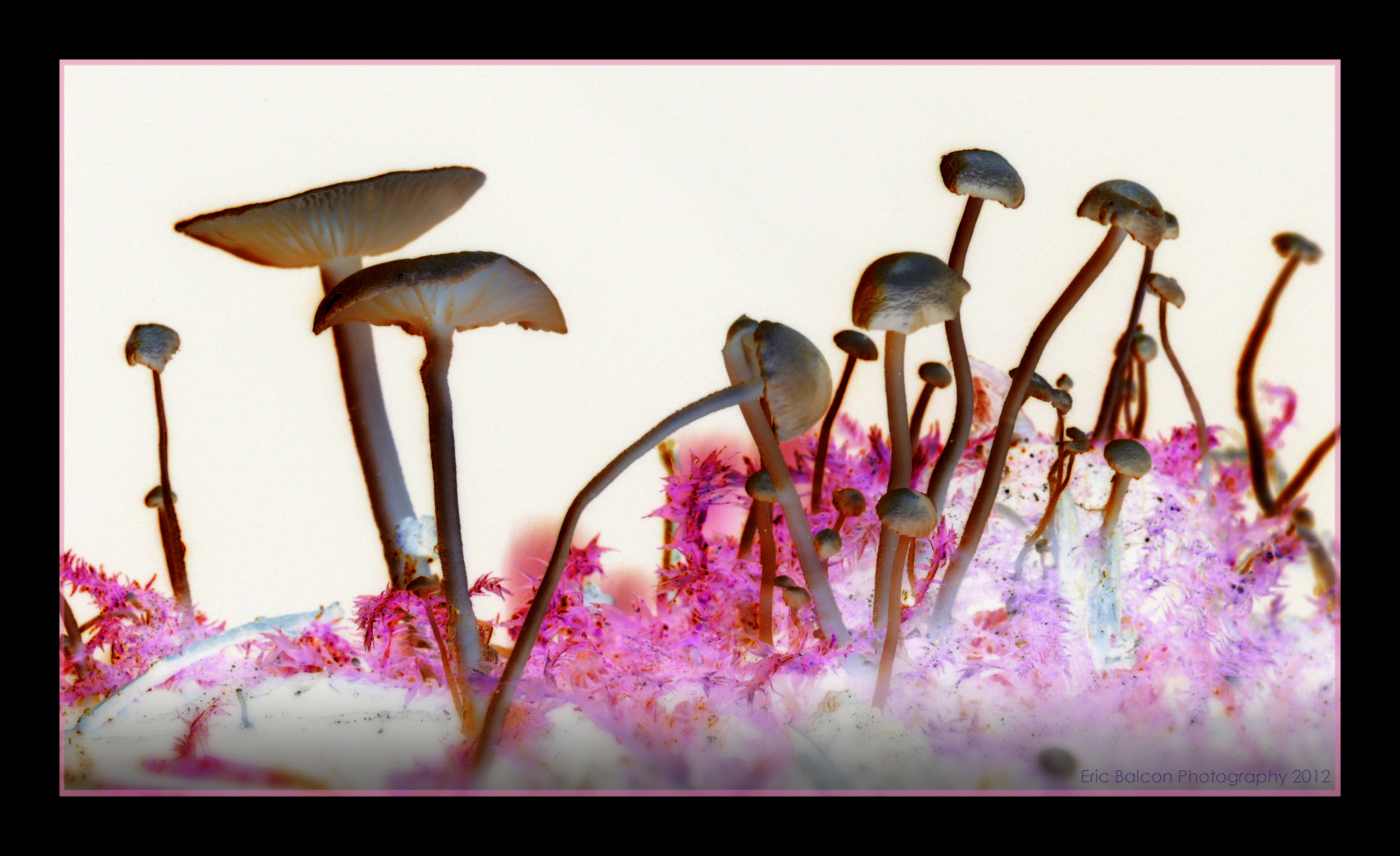 Photograph Inverted Mushrooms by Eric Balcon on 500px